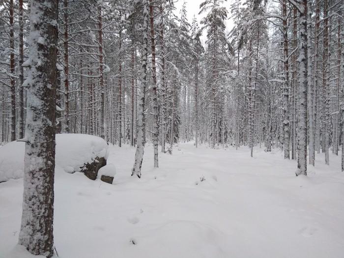 На новый год в поход Нановыйгодвпоход, Лес, Поход, Зимний поход, Туризм, Новый Год, Длиннопост