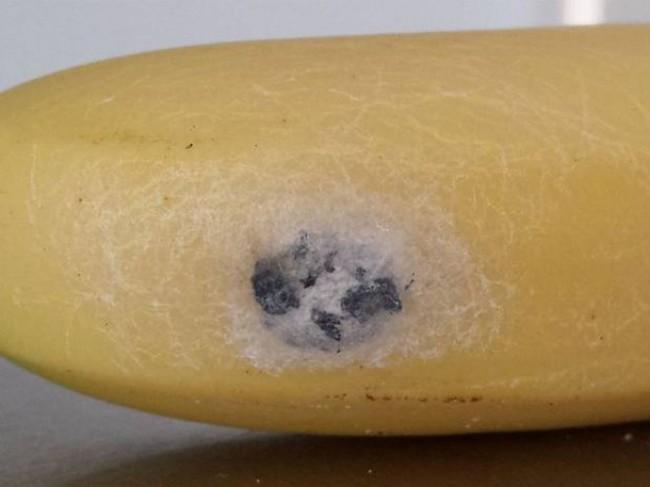 Покупая бананы, будьте крайне внимательны, чтобы серьезно не пострадать – ниже объяснение и фотопруфы. Банан, Паук, Кладка, Опасно!, Предупреждение, Длиннопост