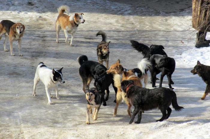 """Закон """"Об ответственном отношении к животным.."""" - или вся правда о повсеместно вводимом в стране ОСВВ Закон, Питомец, Защита, Животные, Проблема, Длиннопост, Собака, Негатив"""
