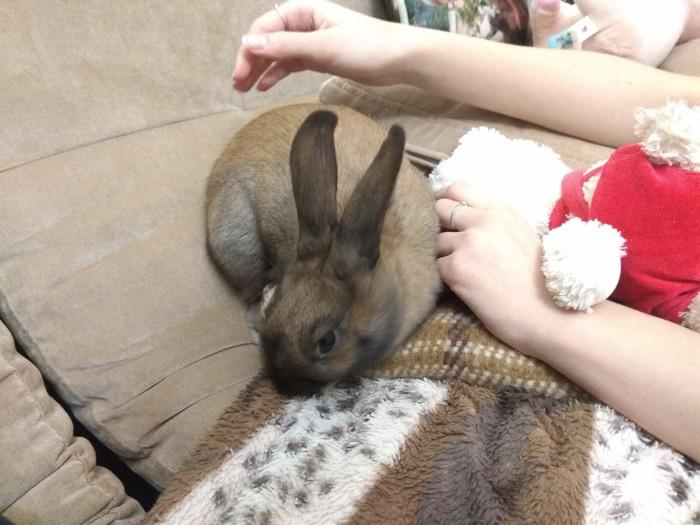 Отдаётся кролик в добрые руки Ставрополь, Кролик, Отдам, В добрые руки, Объявление, Длиннопост, Без рейтинга