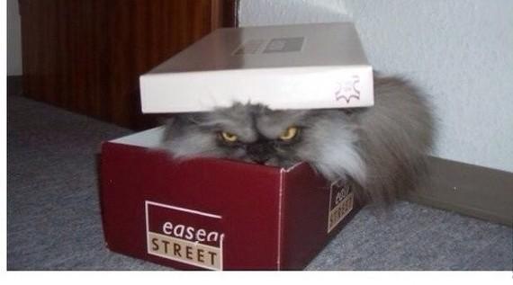 """Поведение """"кот в коробке"""" Кот, Агрессия, Водитель, Длиннопост, Неадекватность"""