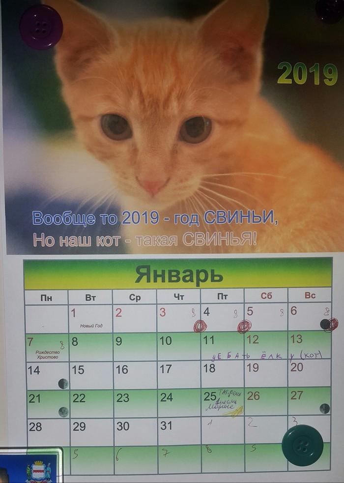 Календарик котэ. Котомафия, Кот, Календарь, План