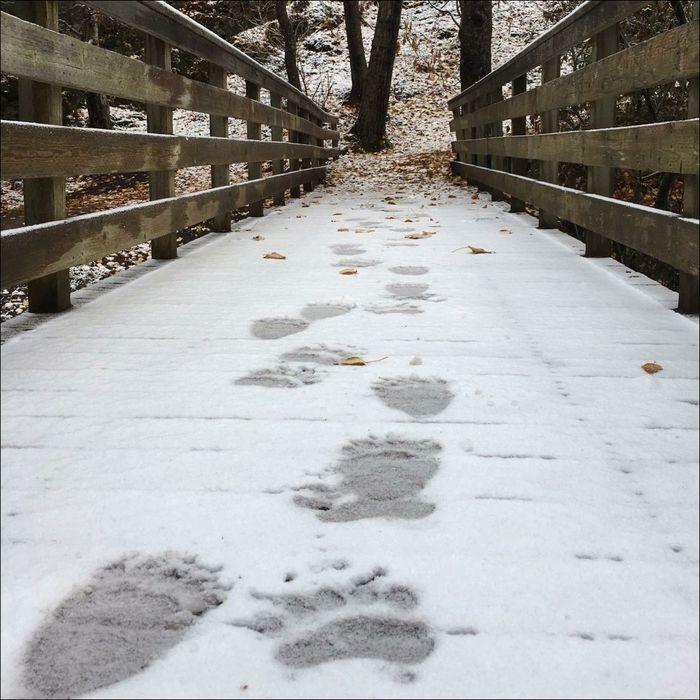 Гуляешь так по лесу, гуляешь ... Медведь, Лес, Следы, Зима, Фотография