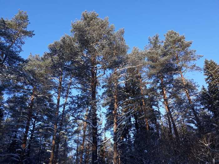Лыжная прогулка Зима, Лыжи, Фотография, Фото на тапок, Длиннопост, Лыжня
