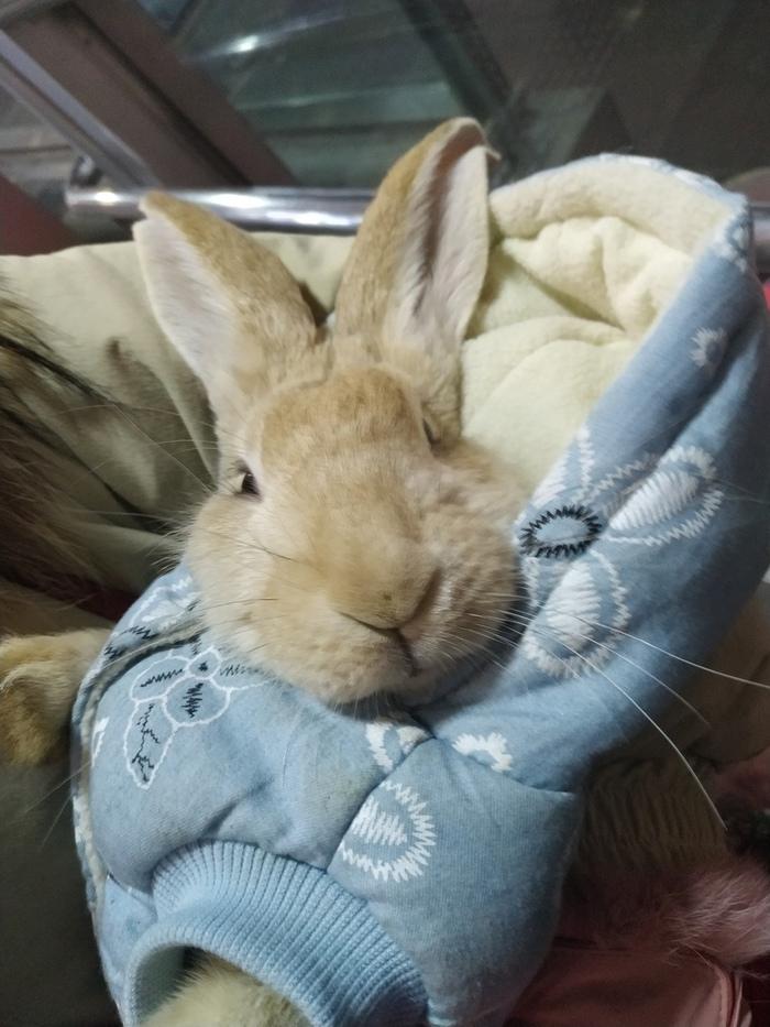 Домашний кролик лучше собаки и кошки. Китай, Кролик, Домашние животные, Длиннопост