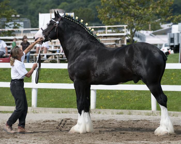 Великаны конного мира Лошадь, Кони, Животные, Длиннопост, Фотография, Текст