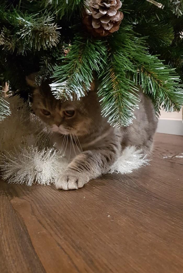 Под елочкой... Новогодняя елка, Кот, Котомафия, Длиннопост