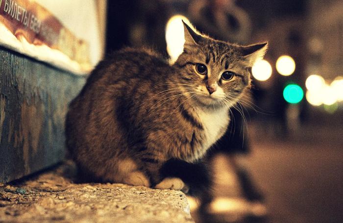 Без своего человека #1 Без рейтинга, Кот, Животные, Друзья, Семья, Одиночество, Coub, Длиннопост