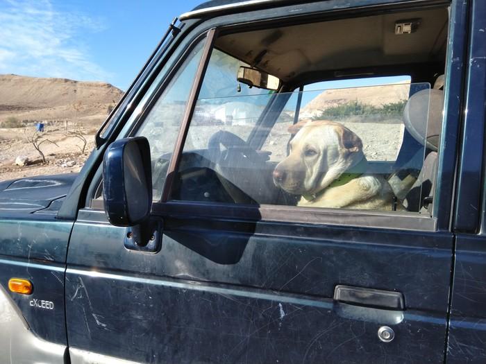 Он сказал поехали и махнул хвостом Собака, Собаки и люди, Водитель, Хороший мальчик