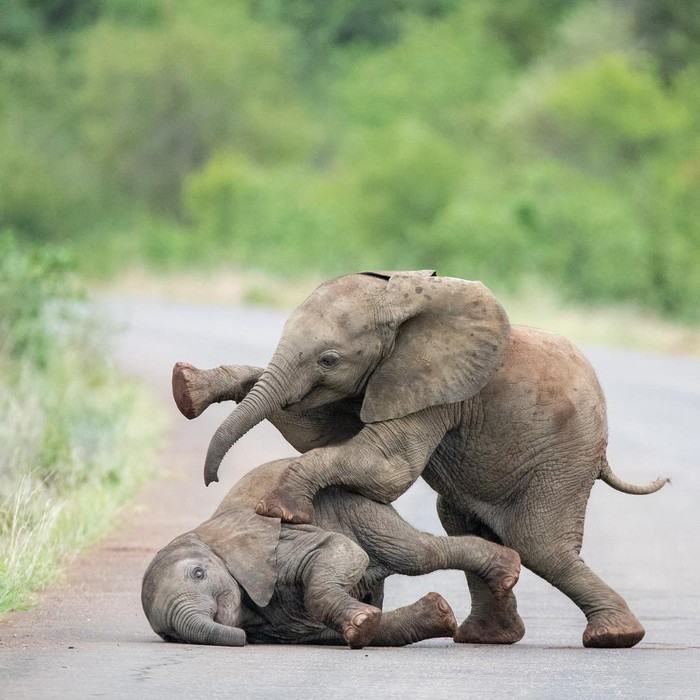 Друзья Фотография, Животные, Слоненок, Милота, Африка, Национальный парк, Длиннопост