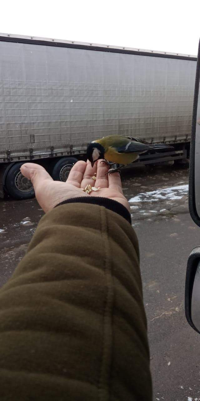 Бесстрашный птиц Птицы, Гопники, Дай семки, Дальнобойщики