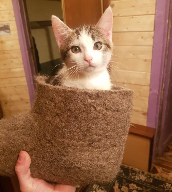 Валенок + Кот Кот, Валенки