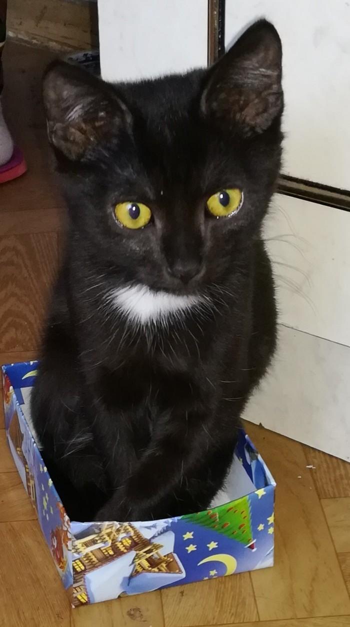 Какой кот, такая и коробка