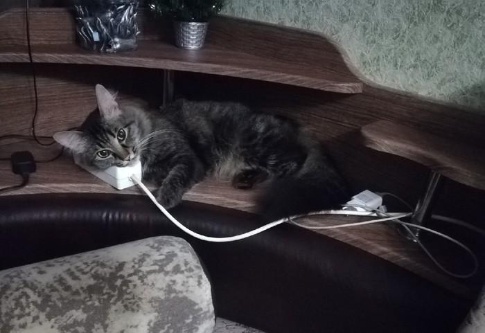 Кот на зарядке Кот, Котомафия, Зарядка