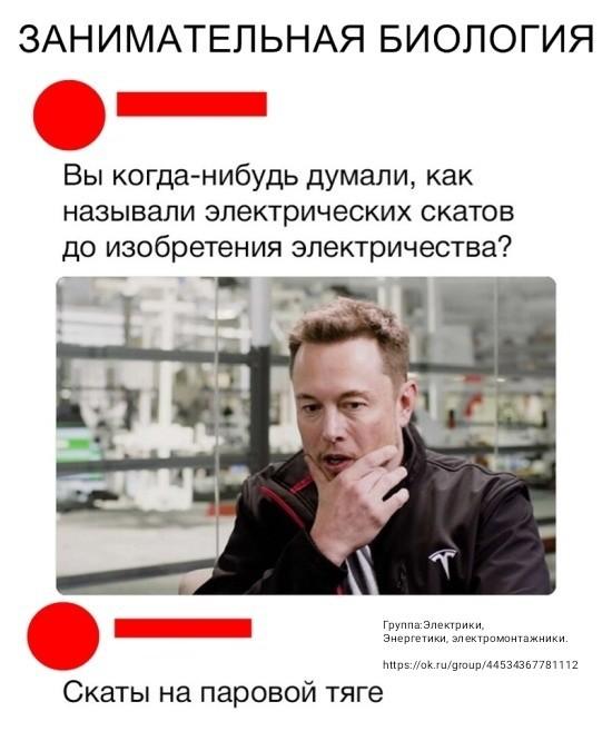 Вопрос... Электрический скат, Илон Маск, Вопрос