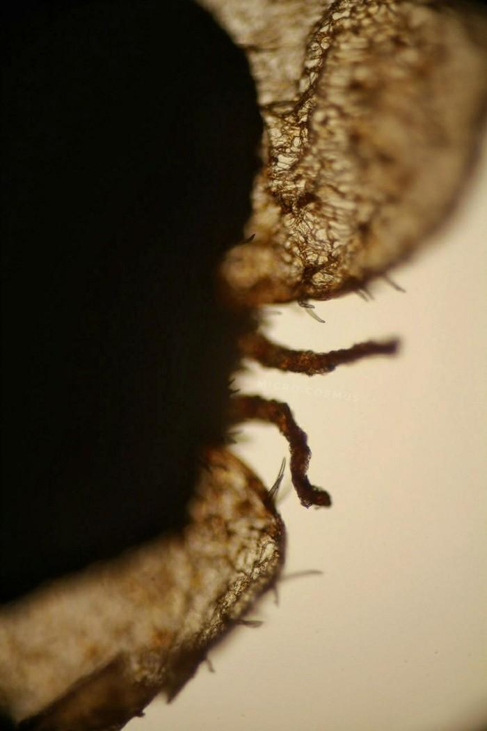 Под микроскопом... берёза! Микросъёмка, Микроскоп, Микромир, Белая береза, Длиннопост