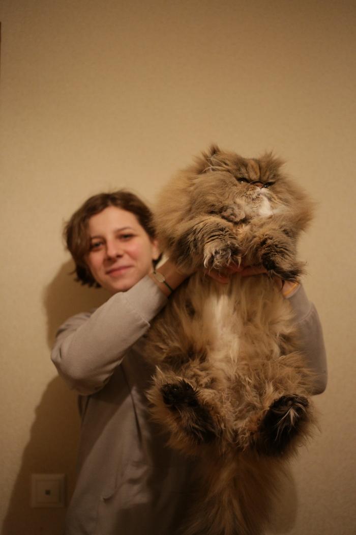 Пост невероятной мохнатости Персидский кот, Кот, Пушистый, Хвастаюсь, Домашние животные, Фотография, Длиннопост