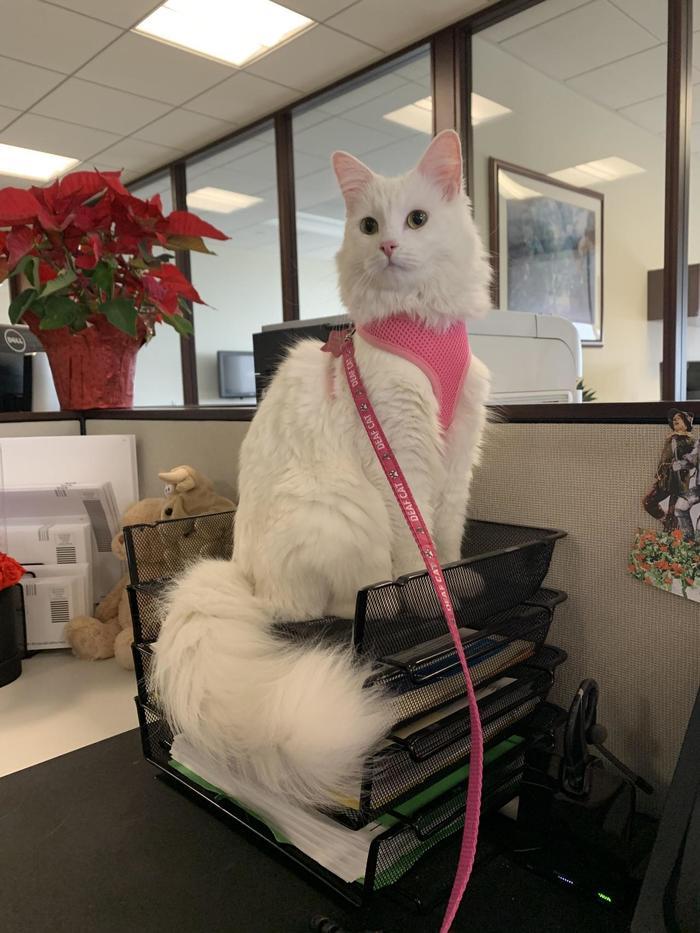 Добрый день. Я секретарь Елена. Чем могу вам помочь?