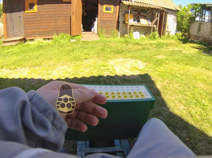 Преимущества использования прививочного ящика на пасеке (4 фото) Матководство, Пасека, Пасечник, Пчеловодство, Пчеловод, Длиннопост