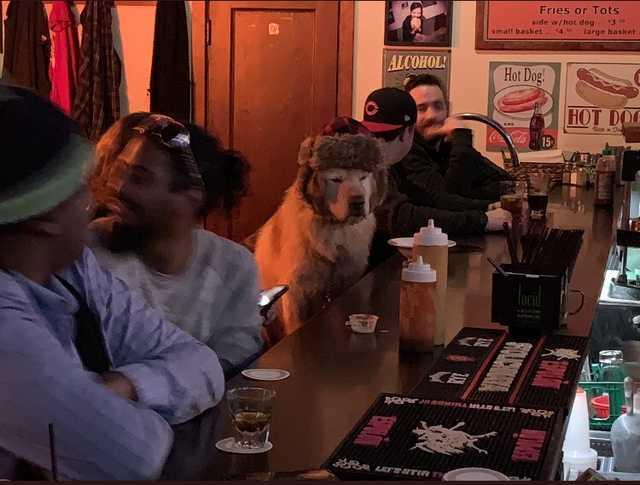 Тоска собачья Собака, Грусть, Тоска, Бар, Шапка, Длиннопост, Twitter, Скриншот