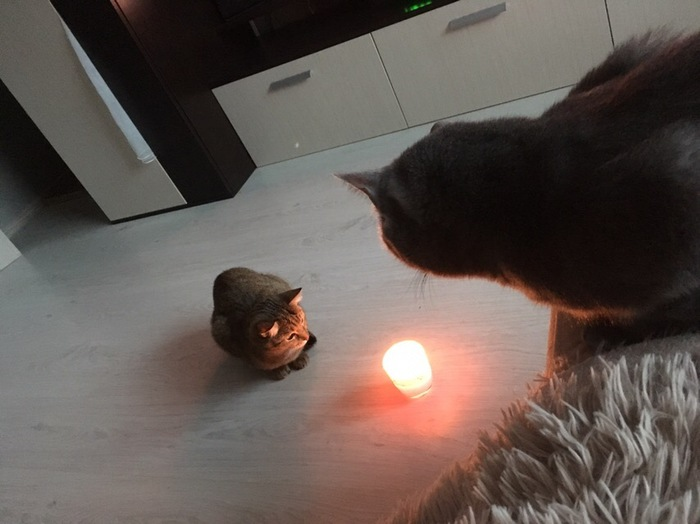 Кошки наблюдают за огнем. Кот, Огонь, Свеча