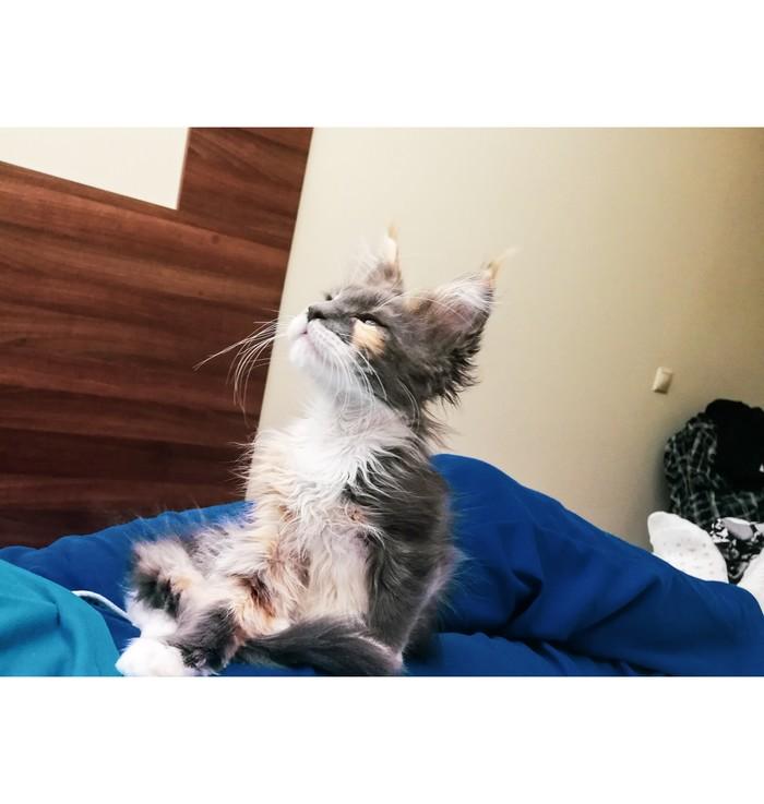 Хочу проснуться, но что-то не получается Мейн-Кун, Котомафия, Кот, Медитация