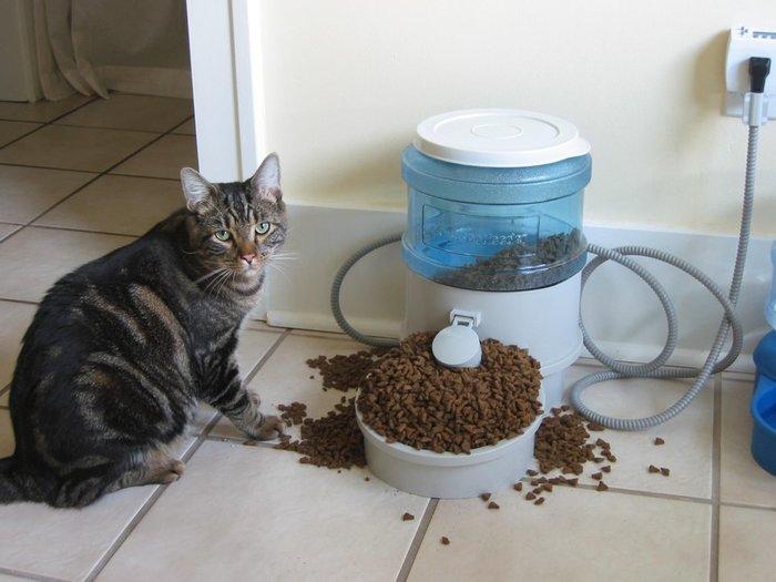 """""""Наш котик немного растолстел, поэтому мы купили ему автоматическую кормушку"""""""