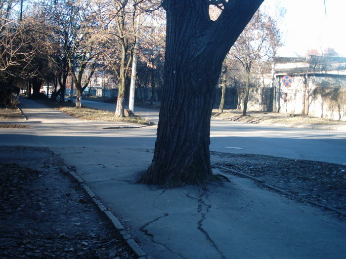 Тополь Юмор, Фотография, Тротуар, Прогулка, Забавное, Дерево