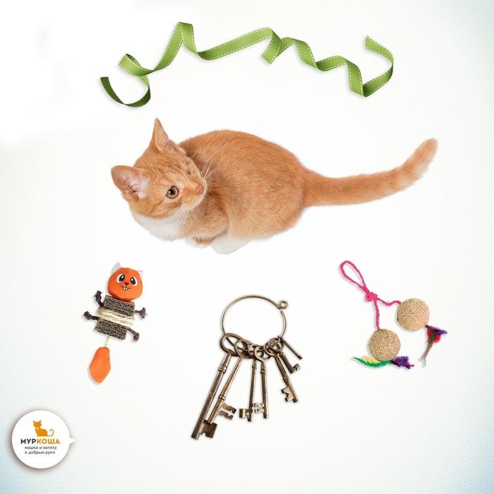 Можно ли оставить кота дома одного? Муркоша, Приют муркоша, Полезное, Кот, Длиннопост
