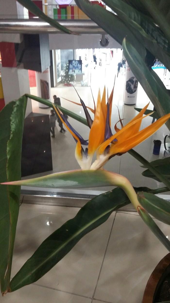 Птичка. Растения, Цветок