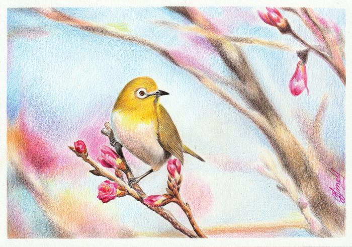 Японская белоглазка Рисунок, Цветные карандаши, Творчество, Анималистика, Птицы, Японская белоглазка, Ветка