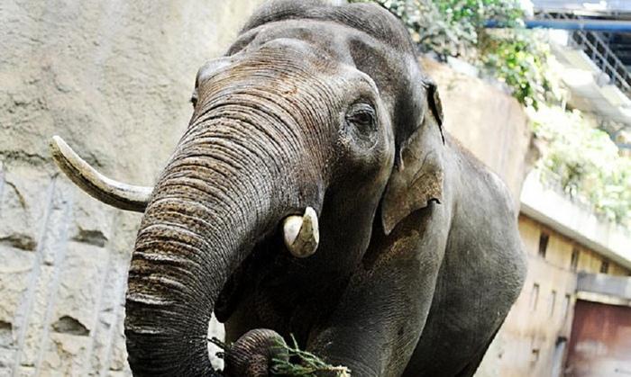 5 Умнейших животных в истории Животные, Факты, Робин Уильямс, Подборка фактов, Батыр, Чантек, Видео, Длиннопост