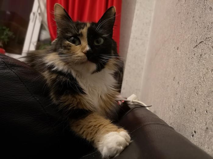 Ты кот такой? Давай до свиданья!