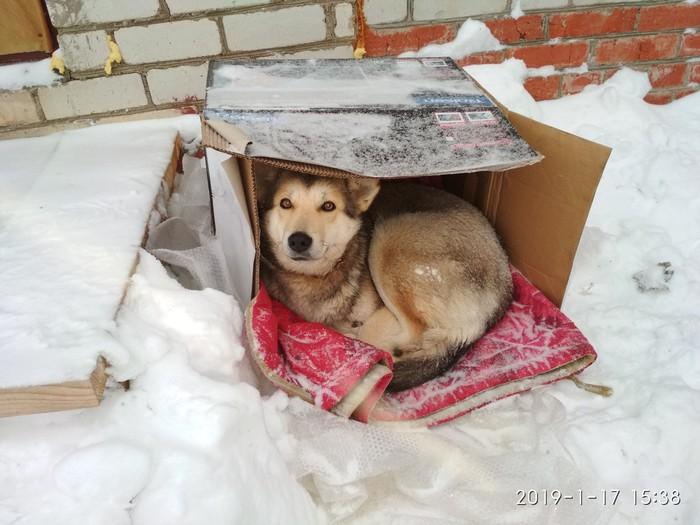 Найдена собака в Московской области, Сергиево-Посадский район [Собака пристроена] Найдена собака, Собака, Ищу хозяина, В добрые руки, Сергиев Посад, Без рейтинга, Найденыш