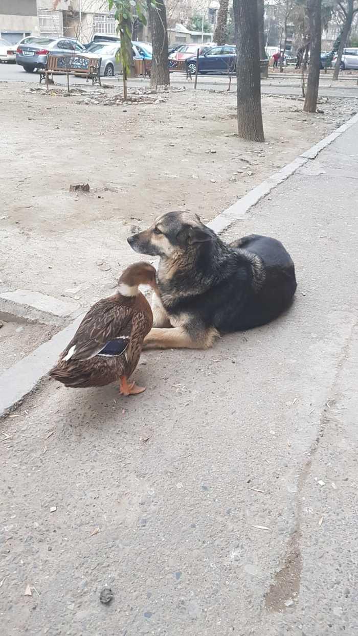 В одном из дворов Тбилиси живут вот такие друзья)