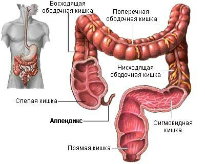 8 частей тела, которые больше не нужны человеку Эволюция, Человек, Биология, Длиннопост