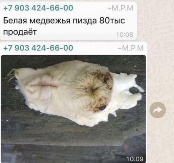 WTF?! Зоофилия, Белый медведь