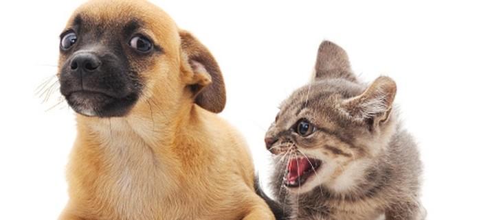 """Для любителей котиков: """"Интернет предпочитает собак: Google разбил известные мифы Сети"""" Кот, Статистика, Вот так вот, Длиннопост"""