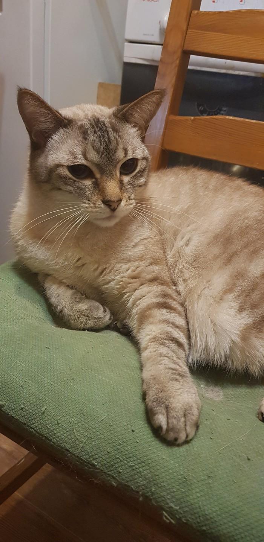 А кот его знает... Кот, Котомафия, Хамелеон, Страннокот, Длиннопост
