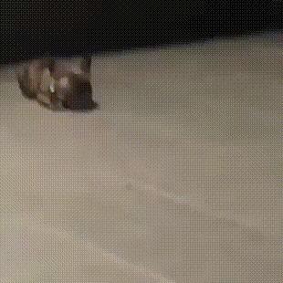 Мыш (кродеться)