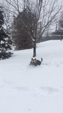 Снегокопака