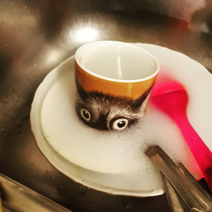 Решил я посуду помыть. А там Фотография, Кот, Подглядывание, Лёгкая наркомания, Кружки