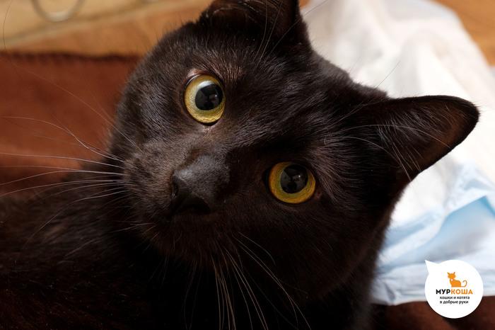 Мистер Блэк – кот, который больше не верит словам! Без рейтинга, Кот, Муркоша, Приют для животных, Приют муркоша, Реальная история из жизни, Длиннопост
