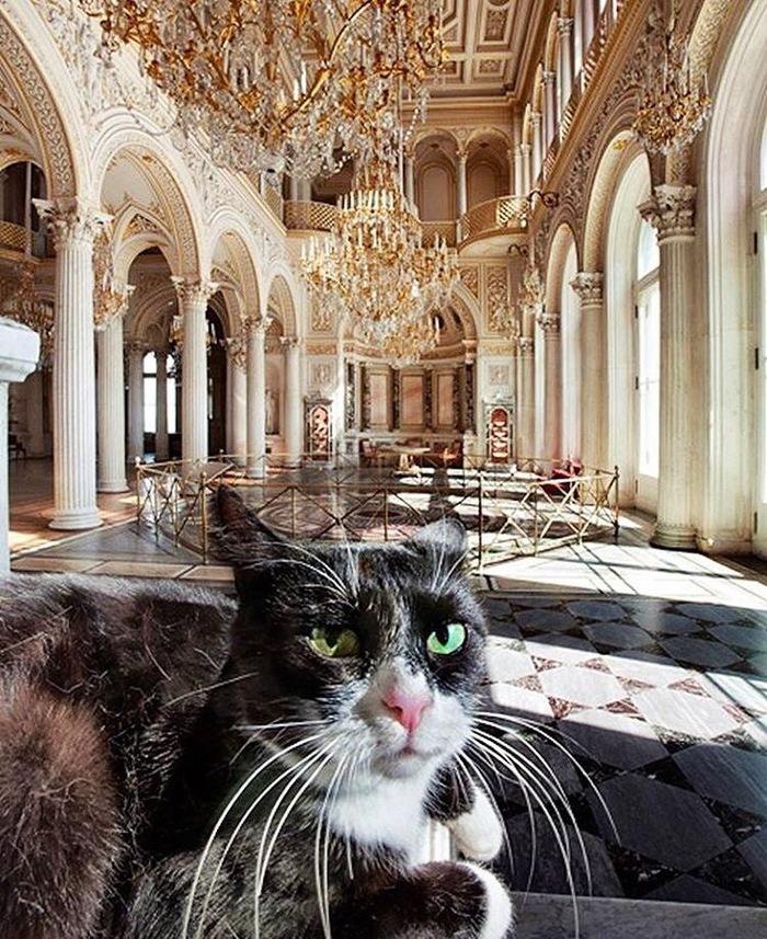 Питерские места. (Эрмитаж) Коты. Санкт-Петербург, Эрмитаж, Кот, Длиннопост