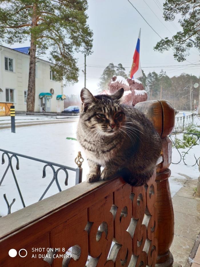 Ангел - котохранитель. Кот, Казань, Аура, Раифа, Длиннопост
