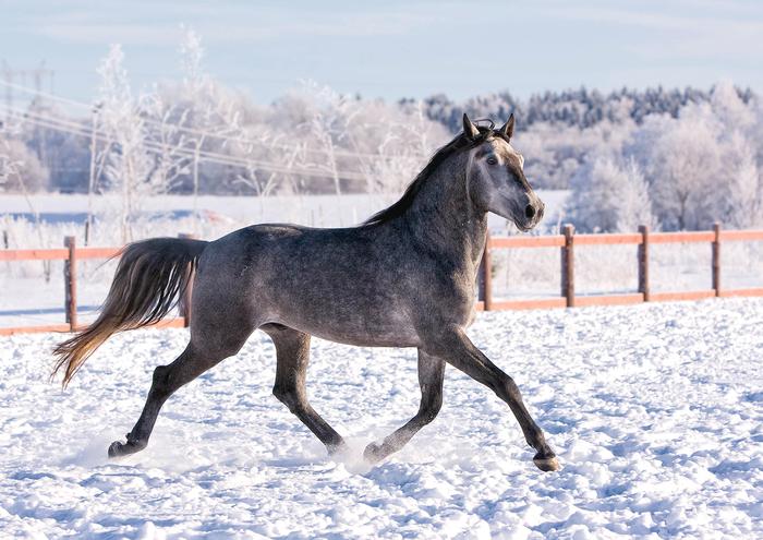 Идеальный окрас для зимы Лошадь, Животные, Фотография, Canon