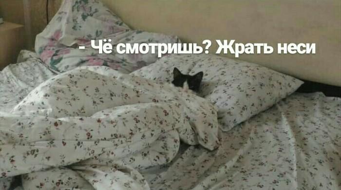 Кот в доме хозяин