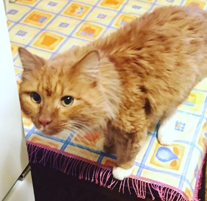 Кот в добрые руки Без рейтинга, Жалко животное, Ищу хозяина, Кот, В добрые руки, Питомец, Москва, Длиннопост