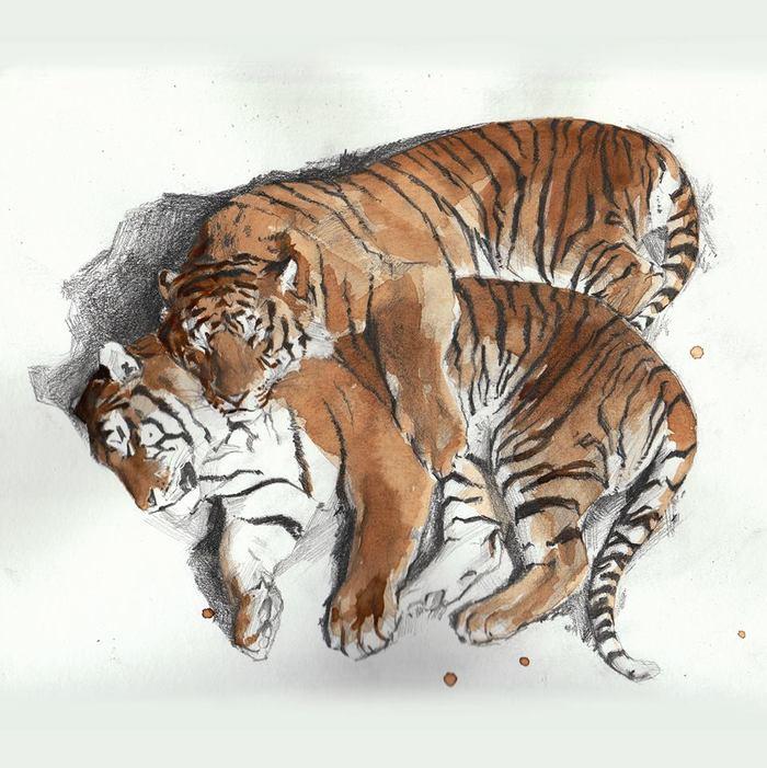 """""""Кофейные тигры"""" Арт, Рисунок, Кофе, Тигр, Большие кошки, Животные, Анималистика"""