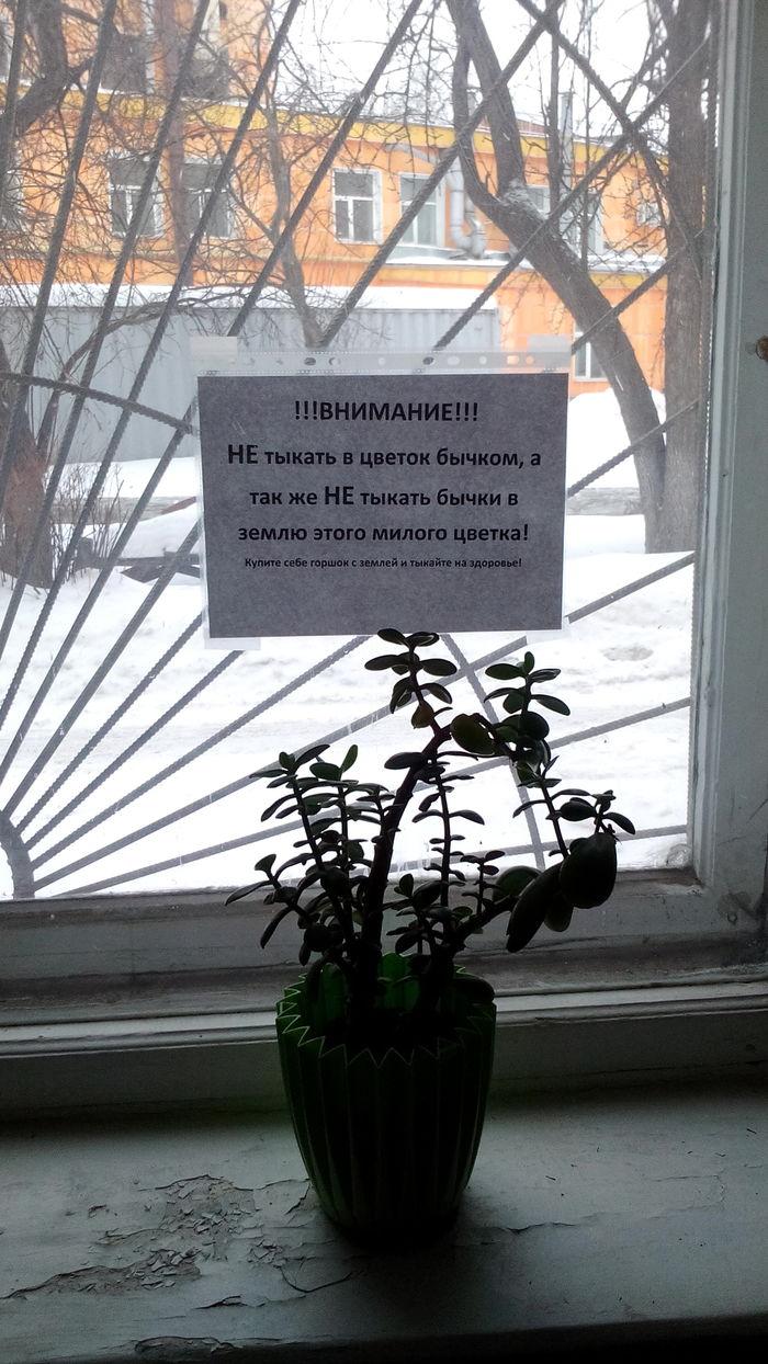 И вообще ничего не делайте с цветком